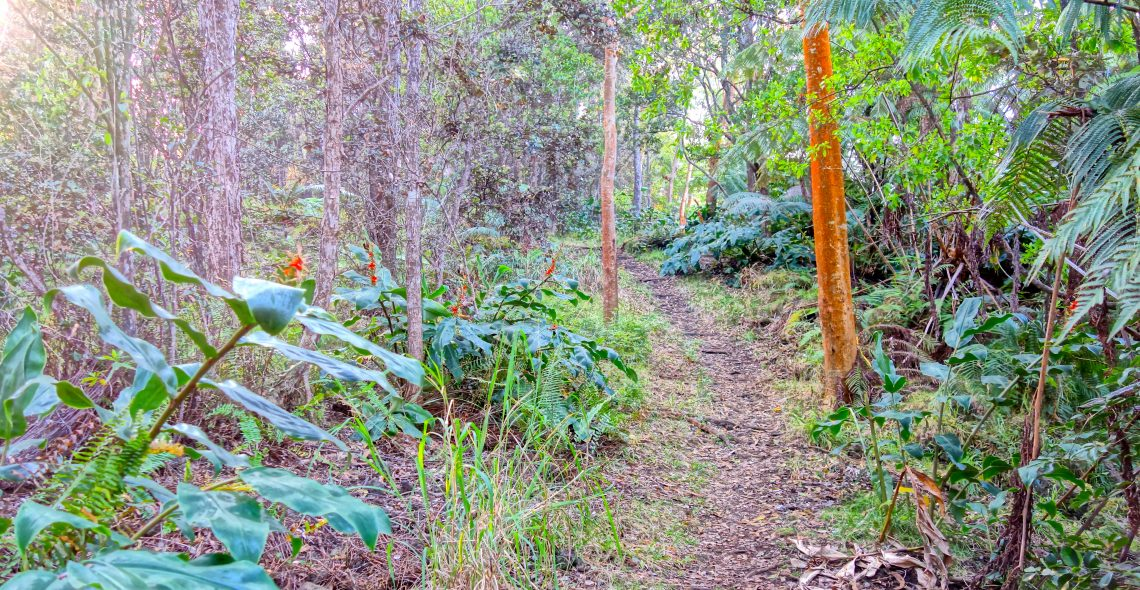 Trail / Cloud Forest