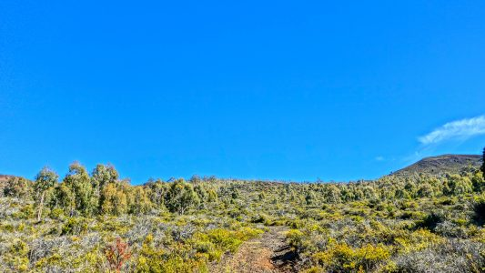 Trail to the Summit / Hualalai