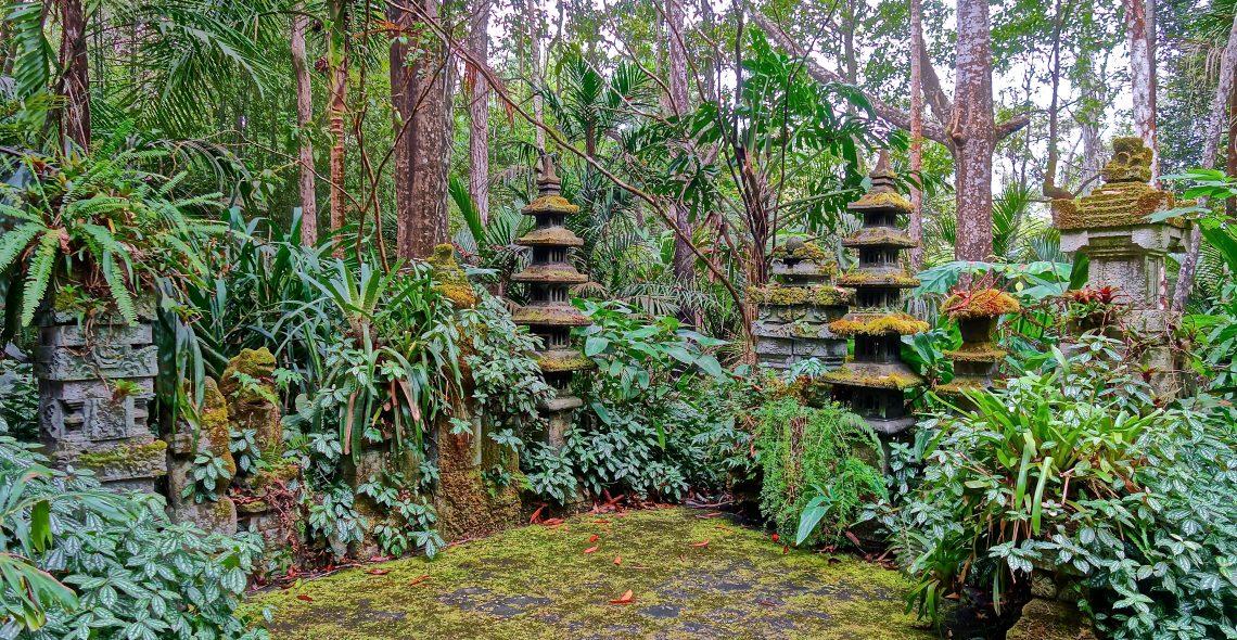 Peace / Cloud Forest Sanctuary