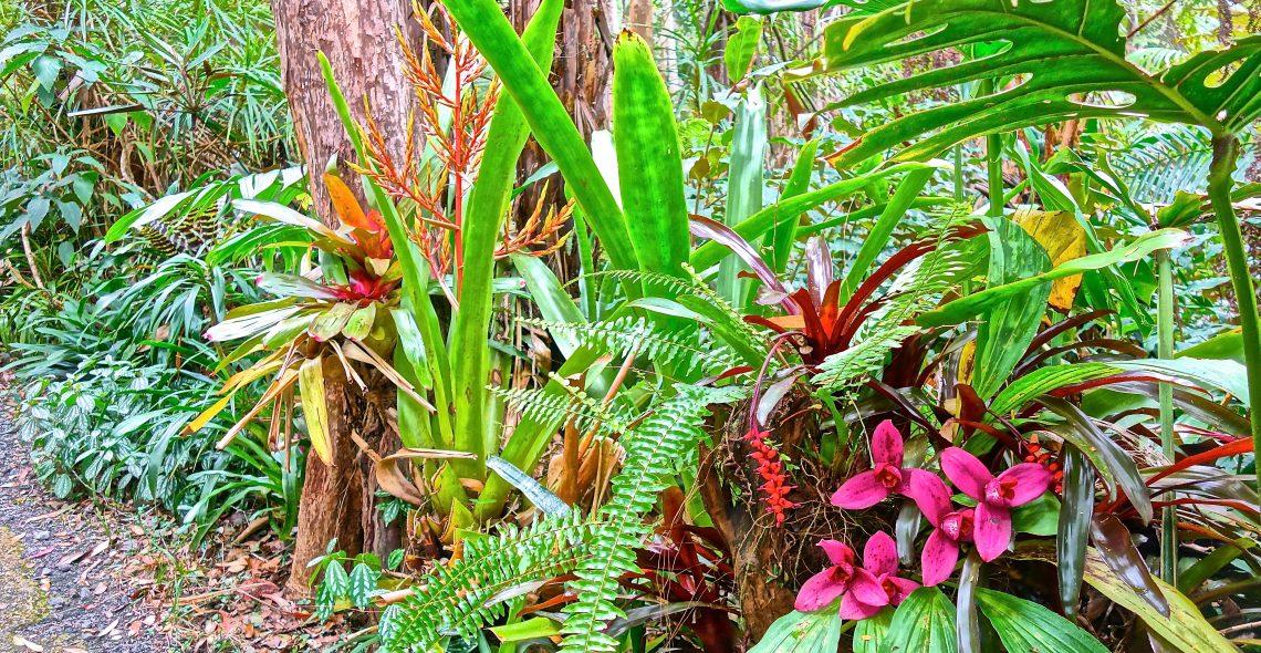 Orchids / Cloud Forest Sanctuary