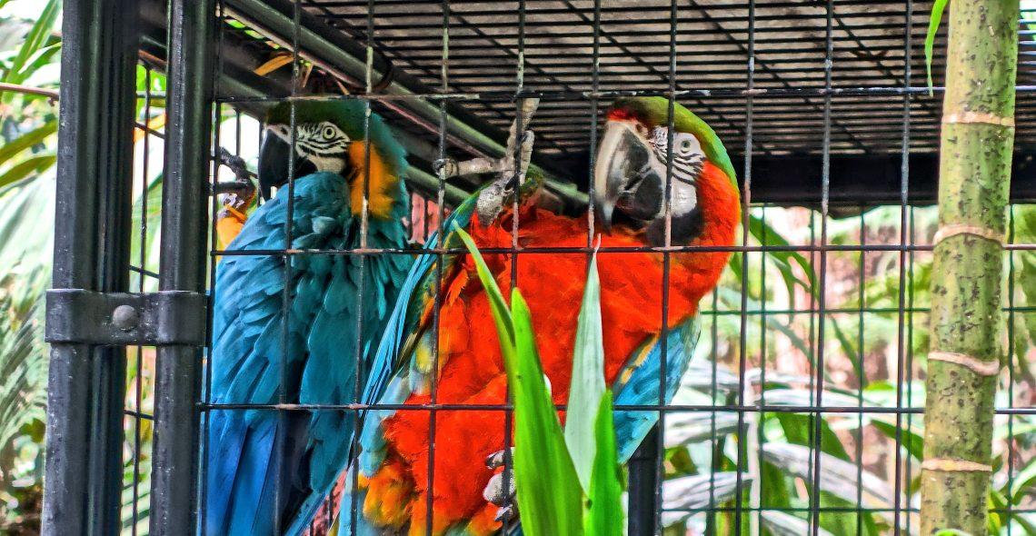 Parrots / Cloud Forest Sanctuary
