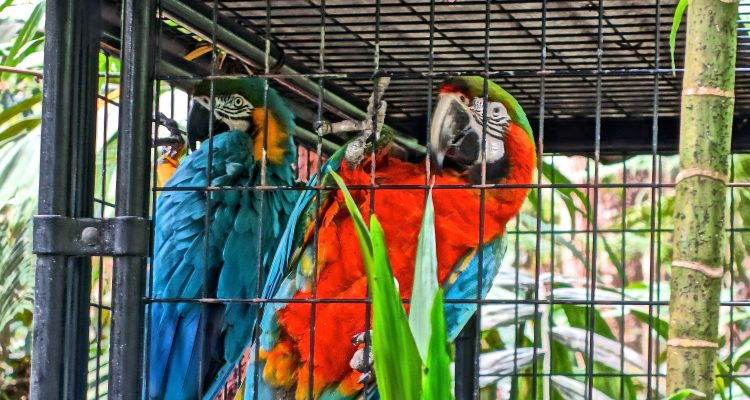 Parrots / Cloud Forest Sanctuary