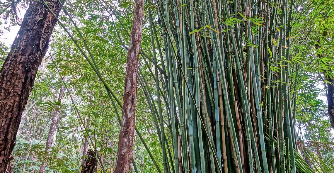 Bamboo / Cloud Forest Sanctuary