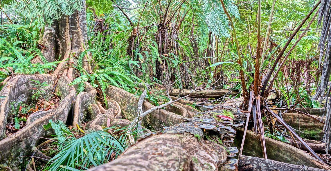 Blue Marble Roots / Cloud Forest Sanctuary