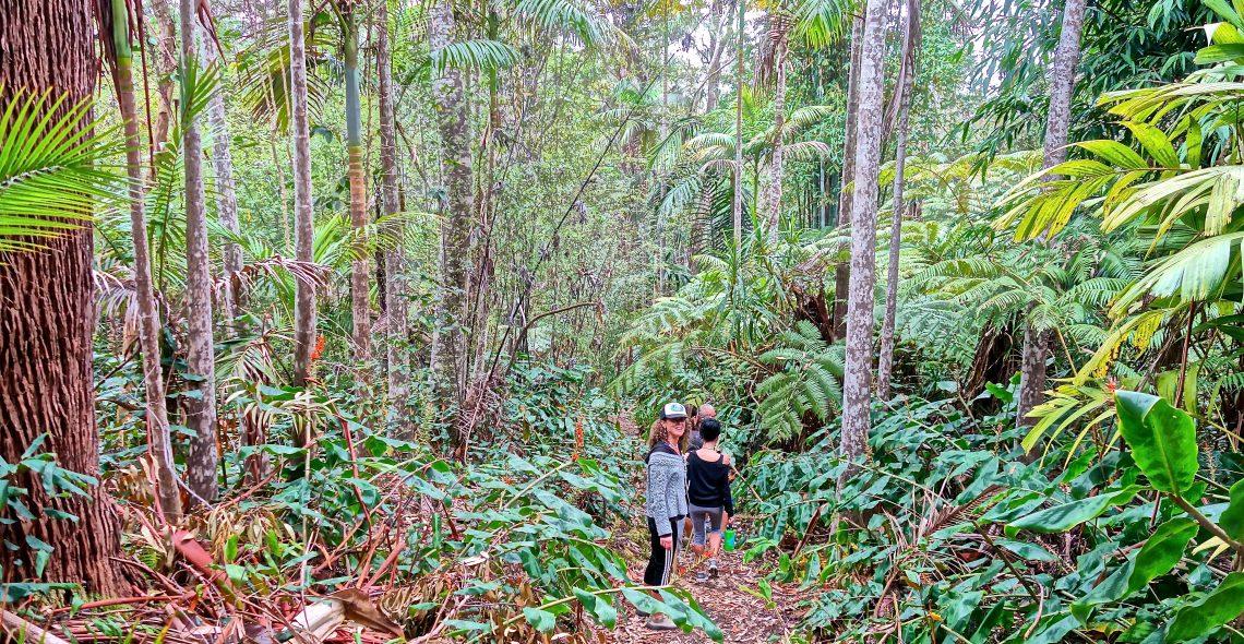 Visitors / Cloud Forest Sanctuary